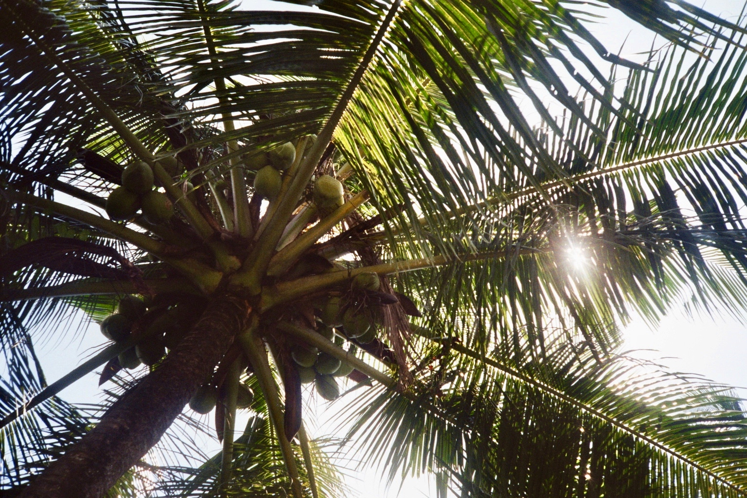 Sri Lanka analog - 65